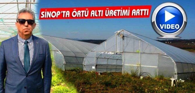 SİNOP'TA ÖRTÜ ALTI ÜRETİMİ ARTTI