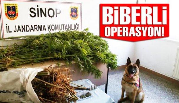 Biberli Operasyonda 2.4 kilo esrar ele geçirildi