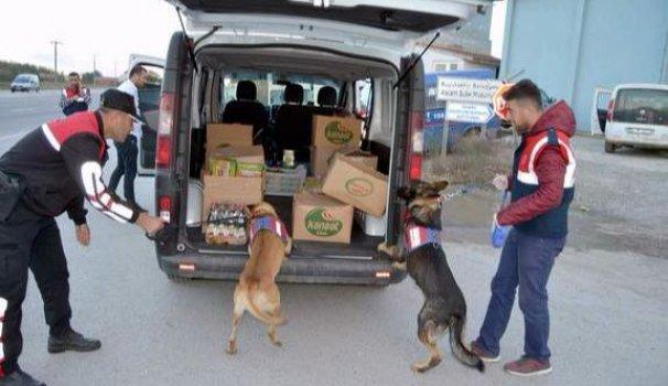 Bu köpekler suçluların peşinde!