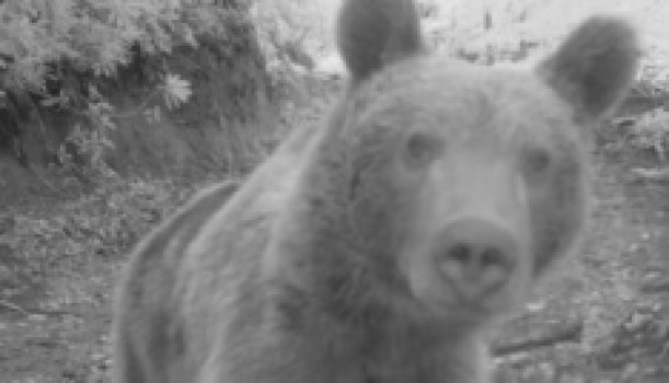 Sevimli ayıdan selfie pozu