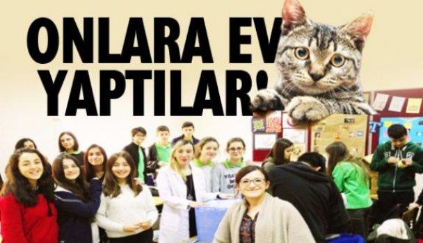 Öğrenciler sokak kedileri için ev yaptı