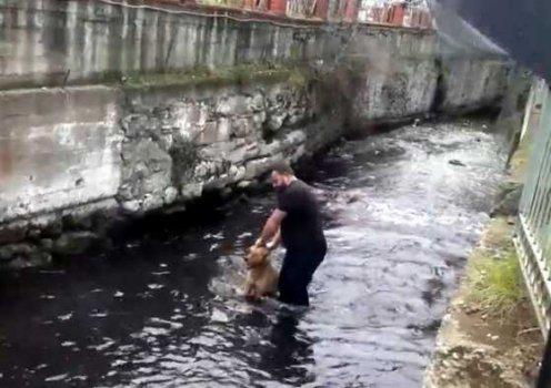 Dereye düşen köpeği kurtardı