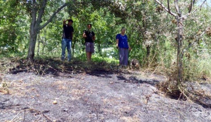 Sinop'ta ot yangını - Vitrin Haber