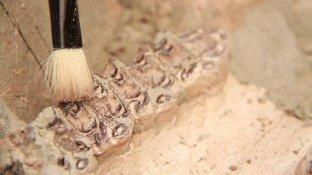 Bilinen hayvan türlerine benzemeyen fosil bulundu!