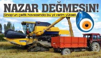 Sinop'un çeltik havzası Boyabat'ta bu yıl verim yüksek