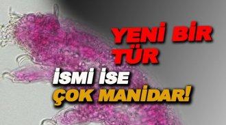 Türkiye'de yeni bir canlı türü tespit edildi, İsmi ise bakın ne oldu?