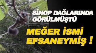 Sinop dağlarında görülen canlının ismi o efsane ile aynı