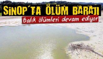 Sinop'ta balık ölümleri sürüyor - Vitrin Haber