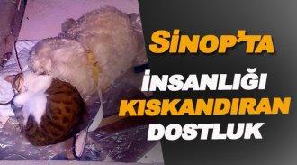 Sinop'ta İnsanlığı kıskandıran manzara
