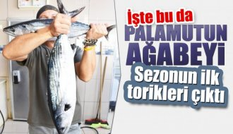 Sinop'ta sezonun ilk torikleri çıktı - Vitrin Haber