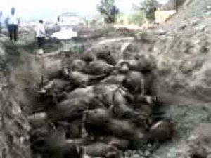 sinop durağan akbel köyü sel felaketi ve işte o ölen hayvanlar